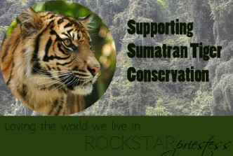 Supporting Sumatran Tigers with Flora and Fauna