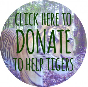 donate to help tigers button